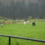 Koppel in Marbach